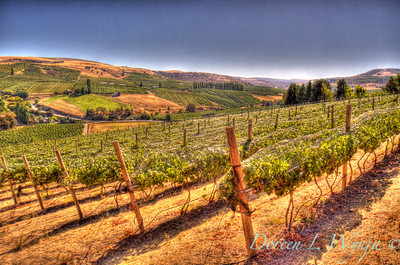 Hillside Vineyards_8701
