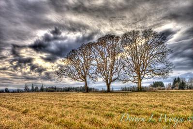 3 Trees_9907