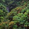 Big Island, Hawai'i