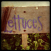 "<div class=""boxTop""><h3 id=""galleryTitle"" class=""title notopmargin"">Lettuce Sign at Kamala Gardens, Oklahoma City, OK, 2011</h3>"