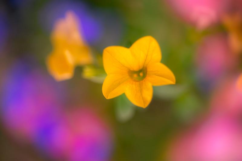 Tiny Flower Impressions 1