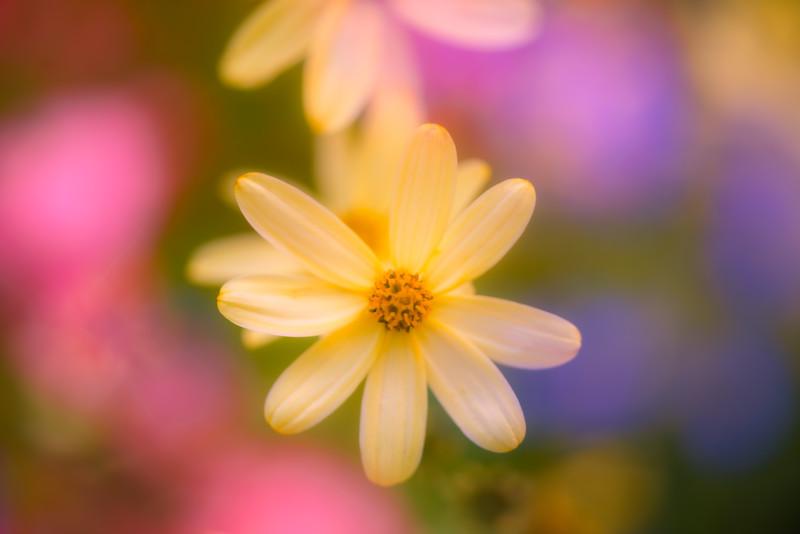 Tiny Flower Impressions 3
