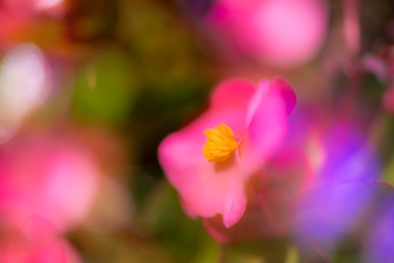 Wild Flower Impressions 1