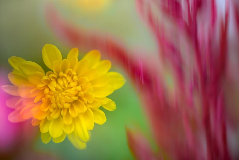 Wild Flower Impressions 3
