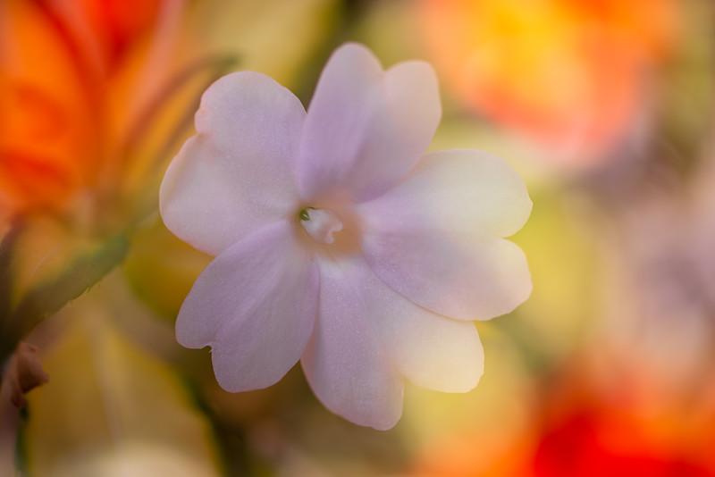 Tiny Flower Impressions 4