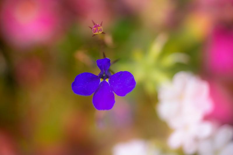 Tiny Flower Impressions 2