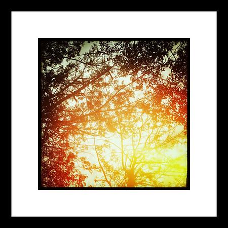Sol y arboleda 1