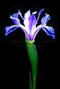 Iris  2010-05-22 - 21-52-42