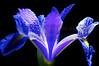 Iris  2010-05-21 - 21-14-38