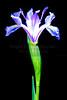 Iris  2010-05-22 - 21-54-09