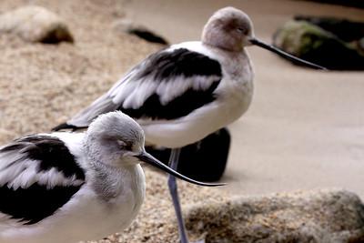 Monterey Bay. January 2010.