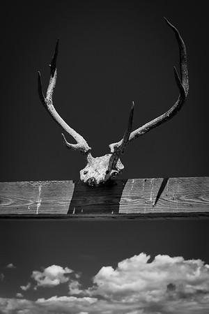 Elkhorn Slough, Moss Landing, California, June 2012