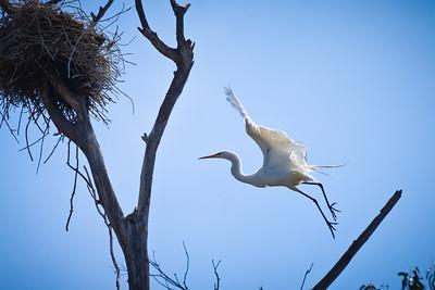 Elkhorn Slough, Moss Landing, California, June 2011
