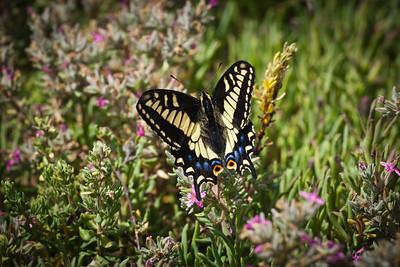 Moss Landing, California. July 2011.
