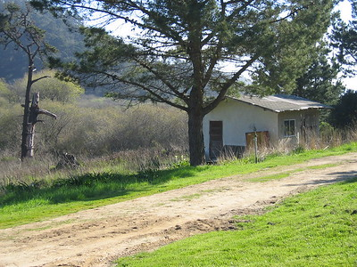 Big Basin State Park, Coast Entrance, California. February 2006