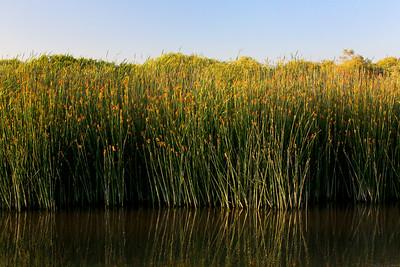 Neary Lagoon, Santa Cruz, California. July 2009