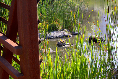 Neary Lagoon, Santa Cruz, California. June 2009