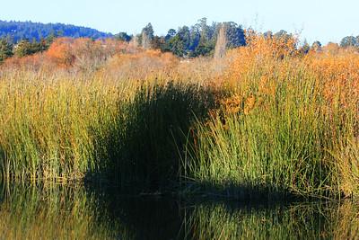 Neary Lagoon, Santa Cruz, California. December 2008