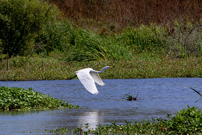 Watsonville Wetlands and Beaches, California