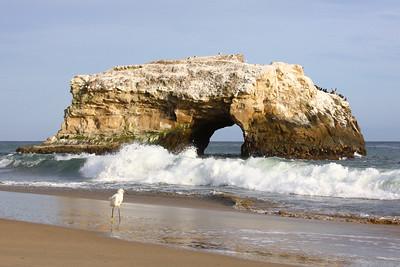 Natural Bridges, Santa Cruz, California. April 2009.