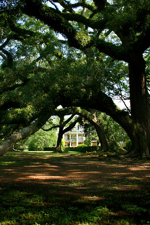 New Orleans, Louisiana, March 2008 Oak Alley Plantation