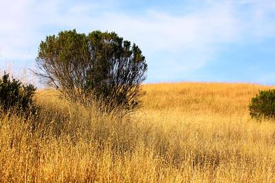 Pogonip, Santa Cruz, California. June 2009