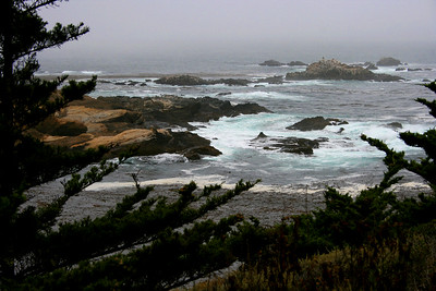 Point Lobos State Reserve, Monterey, California. August 2008