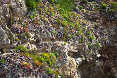 Point Lobos State Reserve, Monterey, California. June 2011