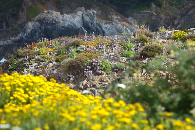 Point Lobos State Reserve, Monterey, California. June 2011