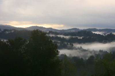 Santa Cruz Mountains. December 2008.