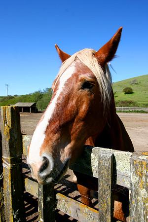 Wilder Ranch, Santa Cruz, March 2009