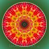dalhia circle
