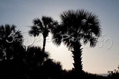 so I LOVE palm trees, they are just so pretty.  intentional silhouette.