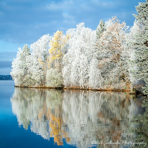 Frost and Reflections