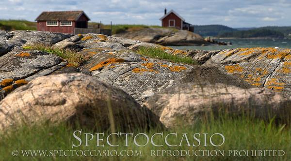 Fotograf på Österlen i Skåne - natur bilder som passar till fotokonst
