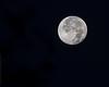 Luna from Dickinson, TX