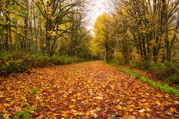 Whitehorse Trail covered in Fall Leaves
