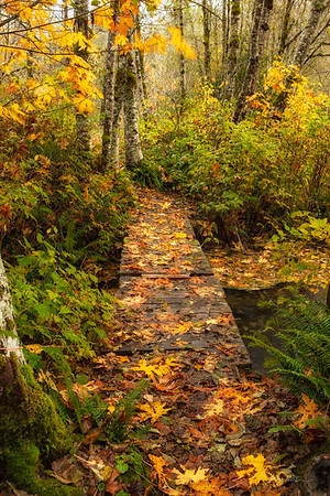 Fortson Mill Pond Bridge, Fall