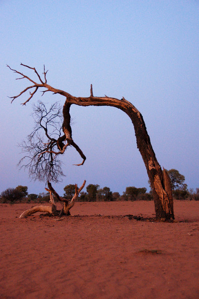 In the desert near Alice Springs, Australia.