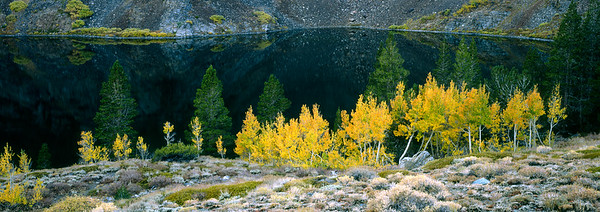 Yellow_Aspen_Pano_PrintReady-