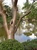 Tree rules pond