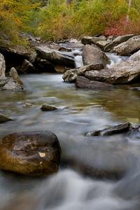 Fall Leaf Clings - Kootenai Creek, Montana