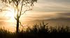 Sun through the Tree - Lee Metcalf Wildlife Preserve, Montana