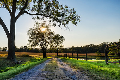 A sunset view of a farm road in Maryland.