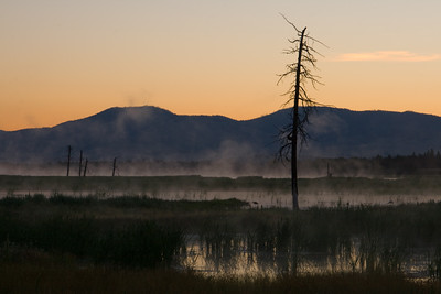 Snag on the Pond in the Early Morning Fog - Lee Metcalf Wildlife Preserve, Montana