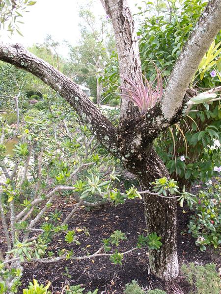 Tree's armpit