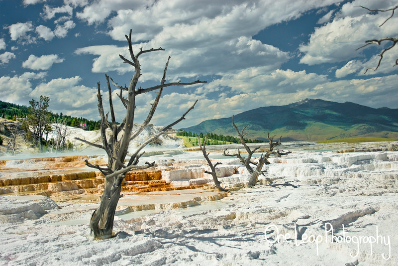 Mammoth Springs at Yellowstone National Park