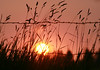 Smokey Sunset through the Grass and Wire - Weippe, Idaho