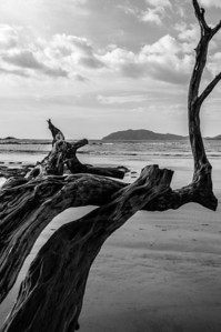 A tree stretches out onto the beach in Tamarindo, Costa Rica.