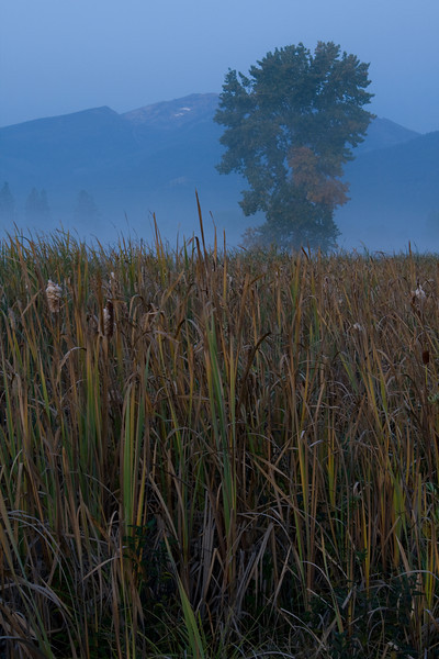 Fall Tree in the Morning Fog - Lee Metcalf Wildlife Preserve, Montana